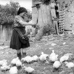 Co bychom se měli naučit ze způsobu stravování našich předků?