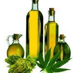 Konopný olej - zelené zlato z konope