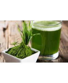 enzymatický nápoj z mladého zeleného jačmeňa